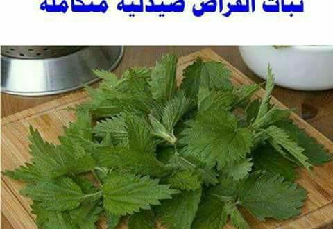☜ نبات القراص..كلمة السر فى علاج أمراض الدم و السرطان